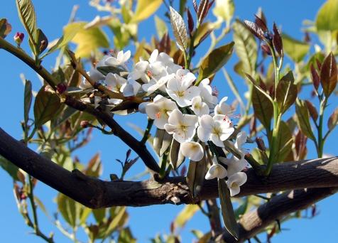 tocado-flores_porcelana-hojas_olivo